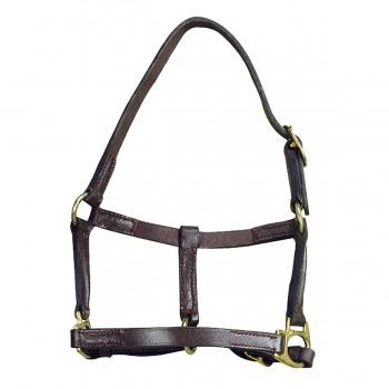 Norton Leather Foal Headcollar
