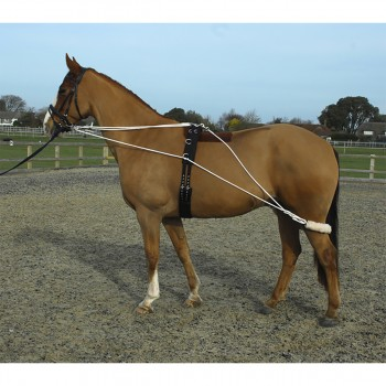 Rhinegold Training System & Roller