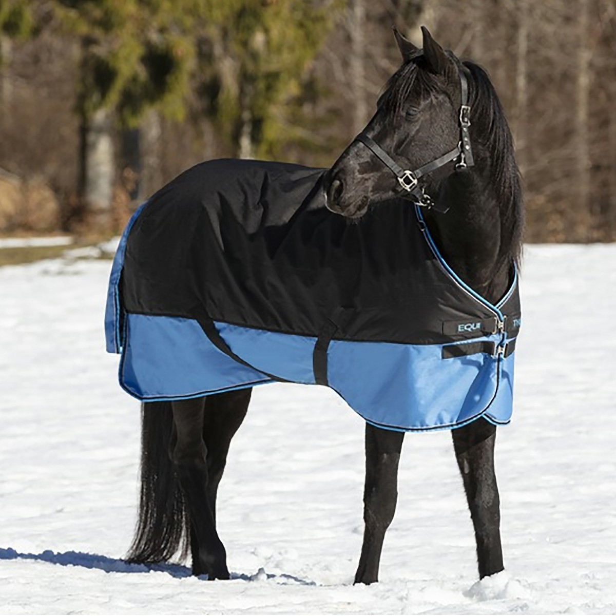 Equitheme Tyrex 600D Lightweight Black/Light Blue Turnout Rug