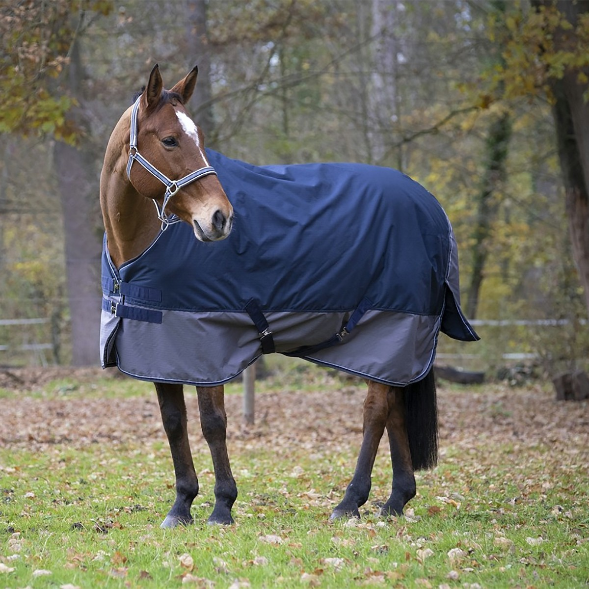 Equitheme Tyrex 600D 150g Blue/Grey Turnout Rug