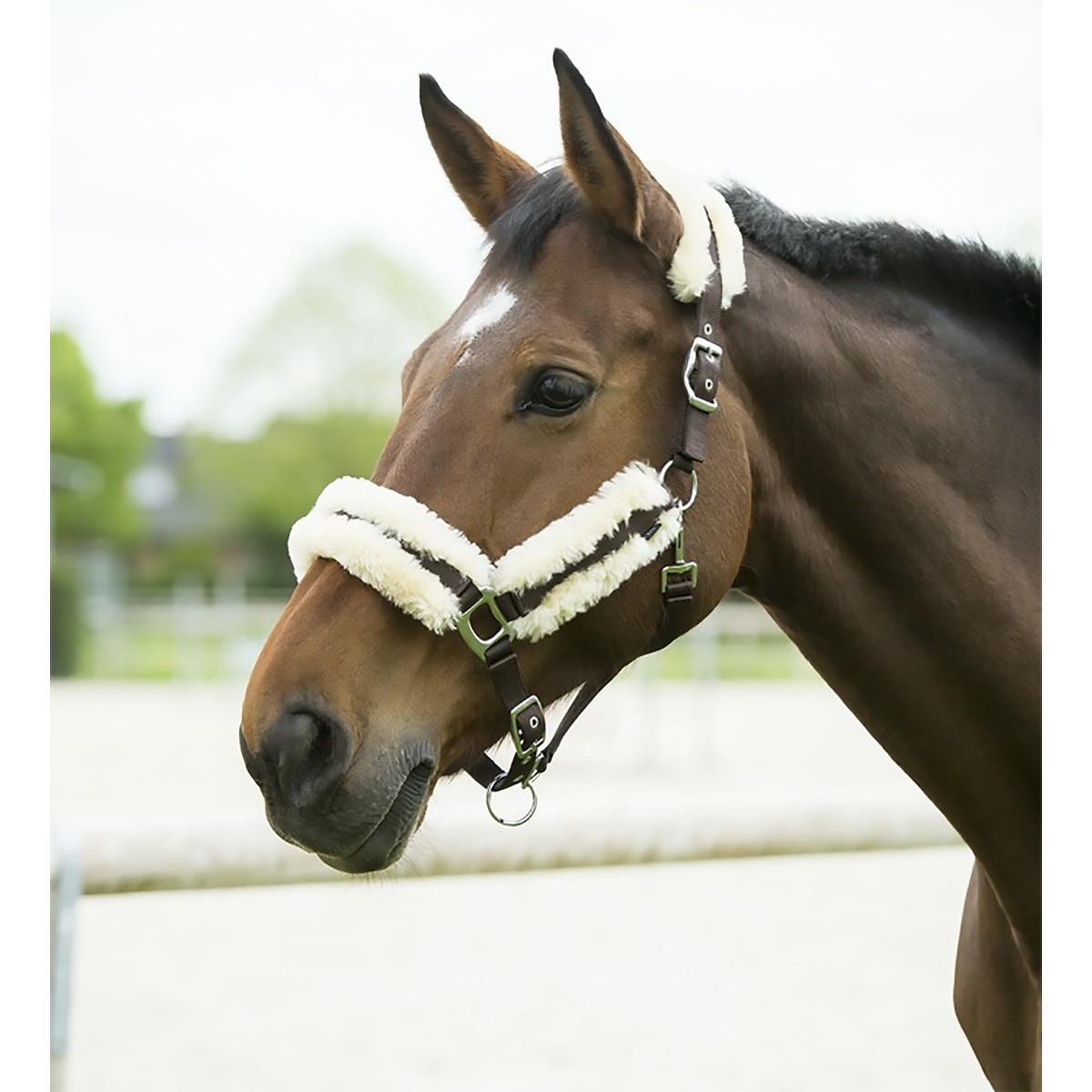 Equitheme Mouton Headcollar With Synthetic Sheepskin