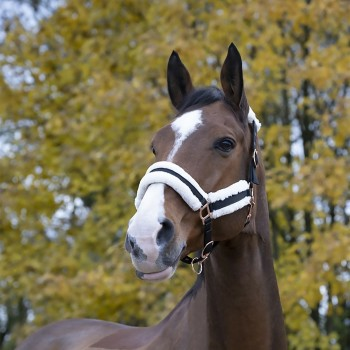 Norton Confort Fleece Lined Headcollar