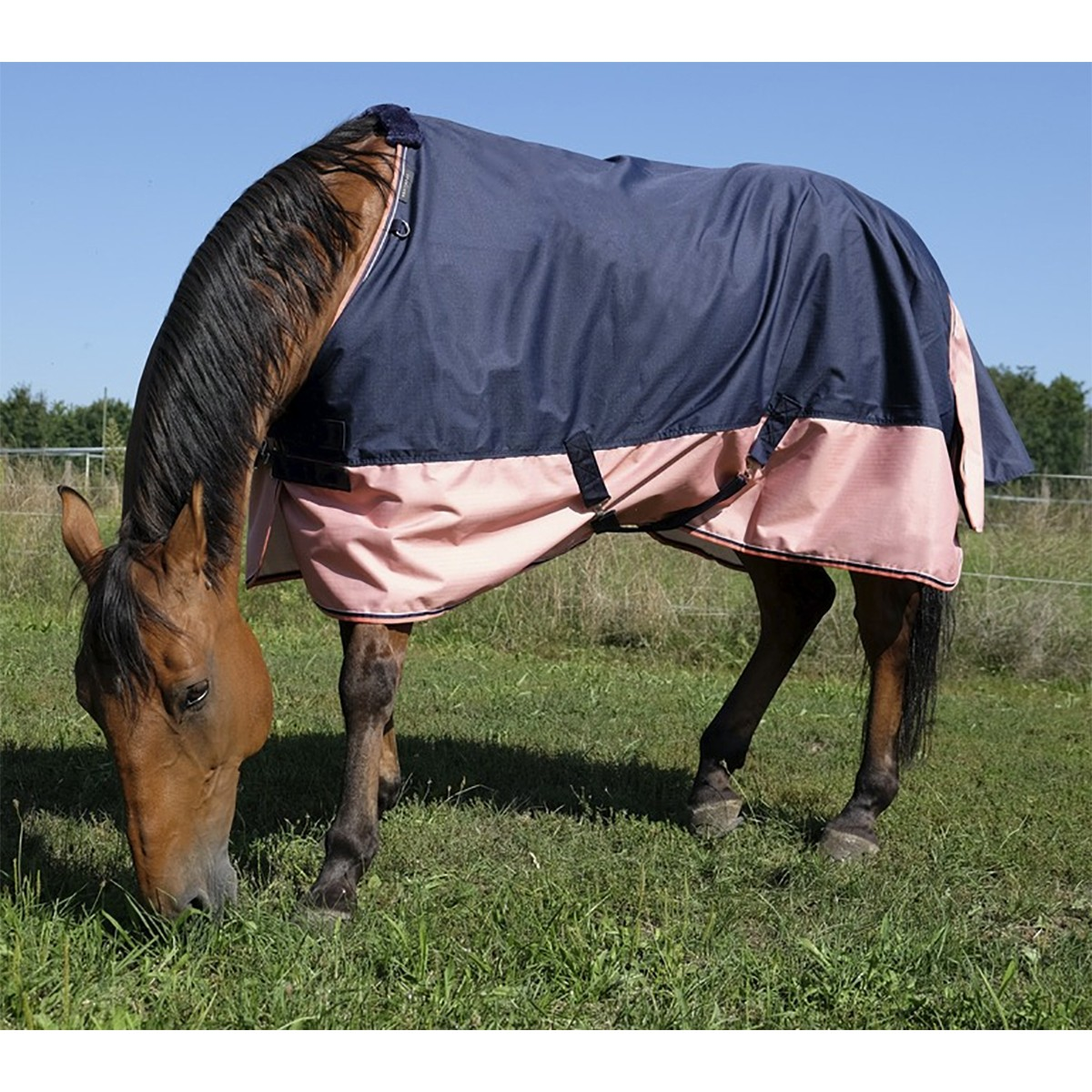 Equitheme Tyrex 600D 150g Navy/Pink Turnout Rug