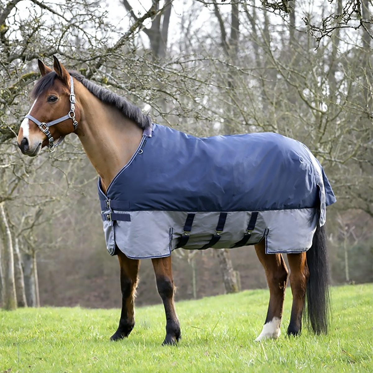 Equitheme Tyrex 600D Belly Belt Lightweight Blue/Grey Turnout Rug